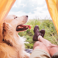 dog inside of a camping tent with men