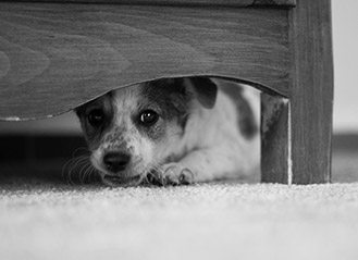 fearful dog hiding under bed