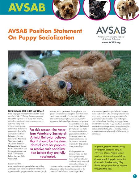 Puppies & Socialization