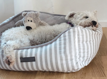 dog sleeping in a pet bed at home